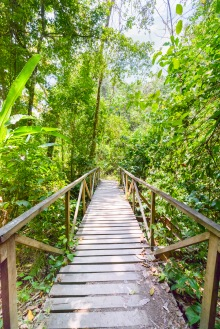 crossing a jungle wood bridge